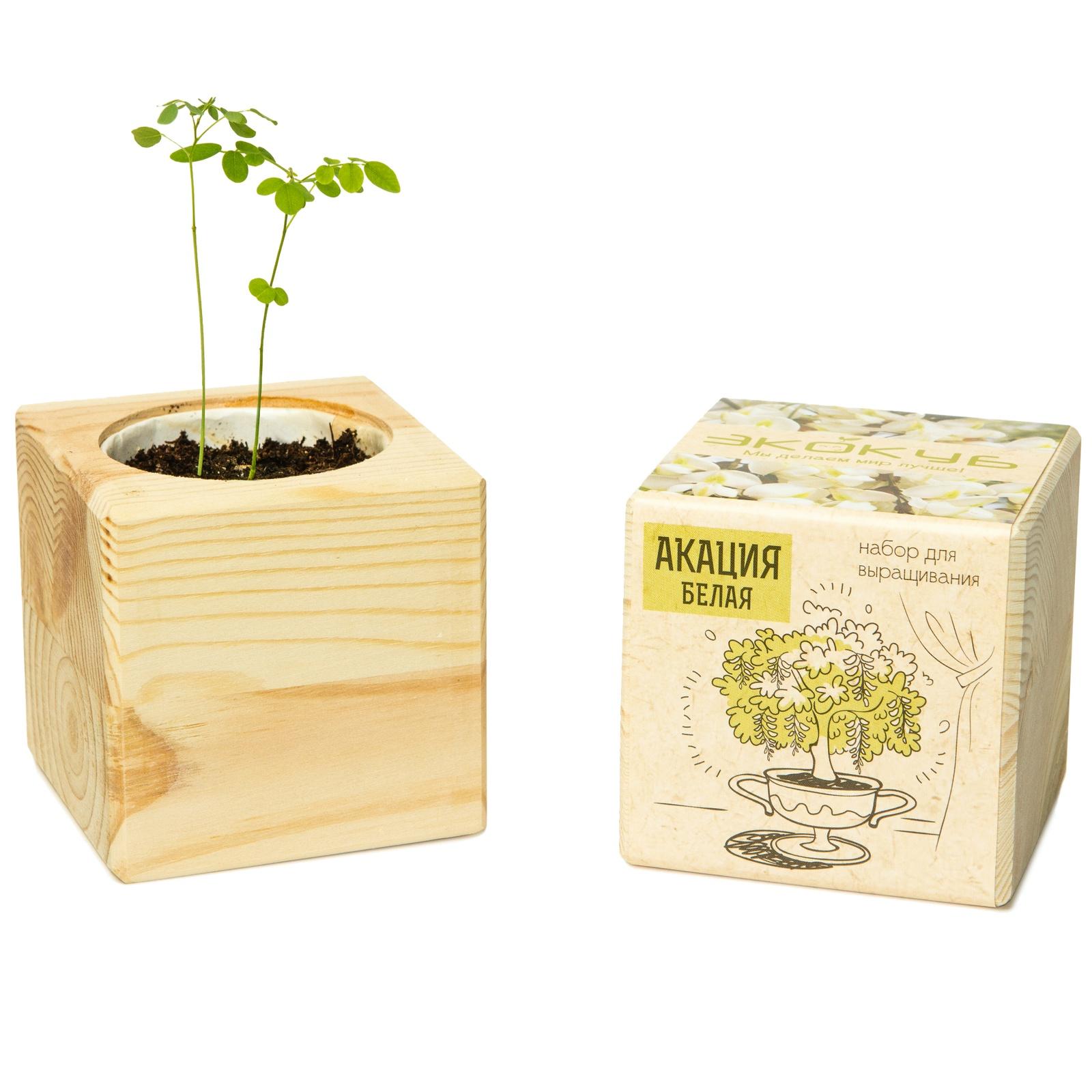 Сувенирный набор ЭЙФОРД Набор для выращивания Экокуб Акация белая, ECB-01-10, светло-бежевый именной набор для выращивания свадебного дерева