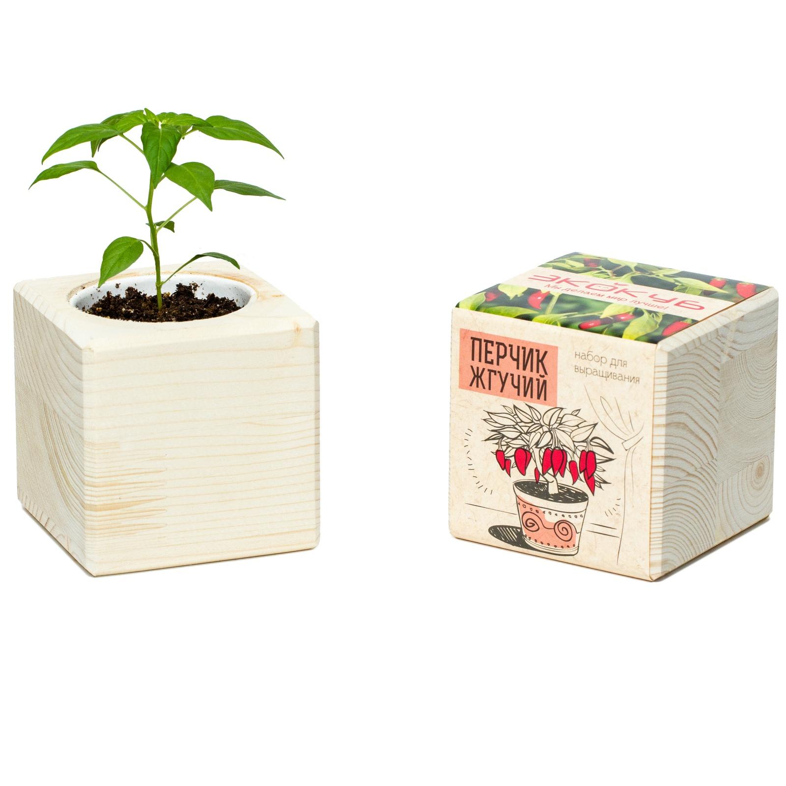 Сувенирный набор ЭЙФОРД Набор для выращивания Экокуб Перчик жгучий, ECB-01-12, светло-бежевый именной набор для выращивания свадебного дерева