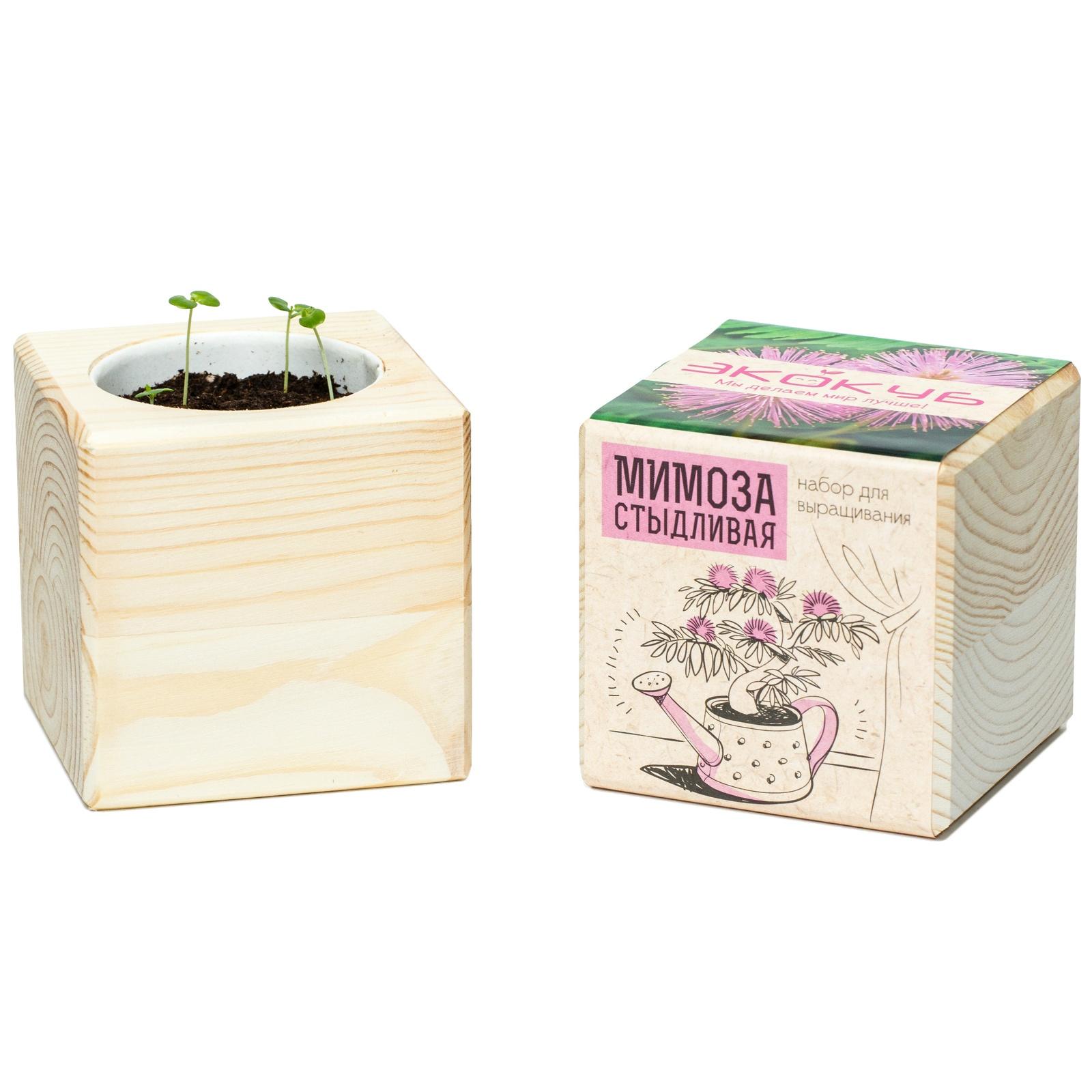 Сувенирный набор ЭЙФОРД Набор для выращивания Экокуб Мимоза стыдливая, ECB-01-15, светло-бежевый именной набор для выращивания свадебного дерева