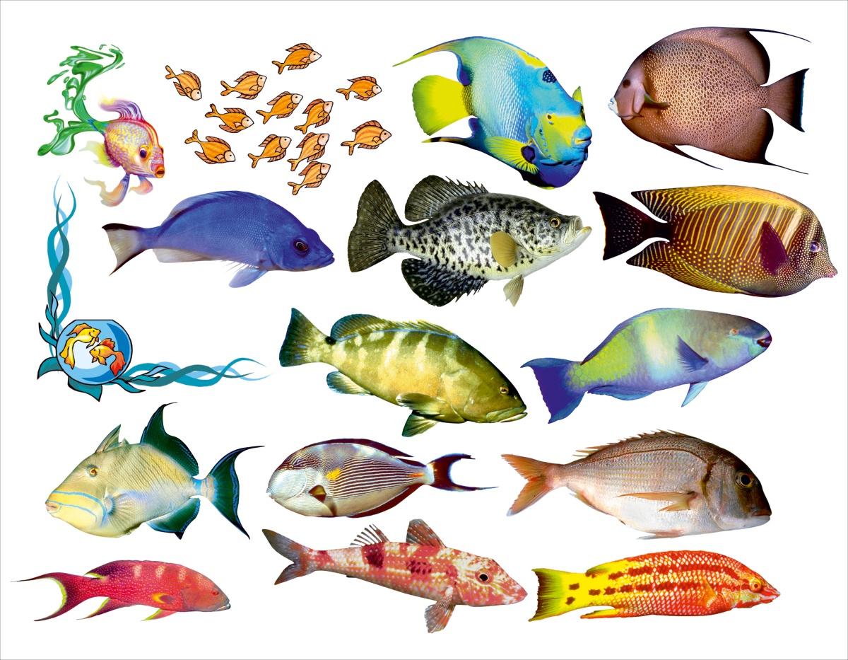рыбки для аквариума картинки на белом фоне интересовало, почему