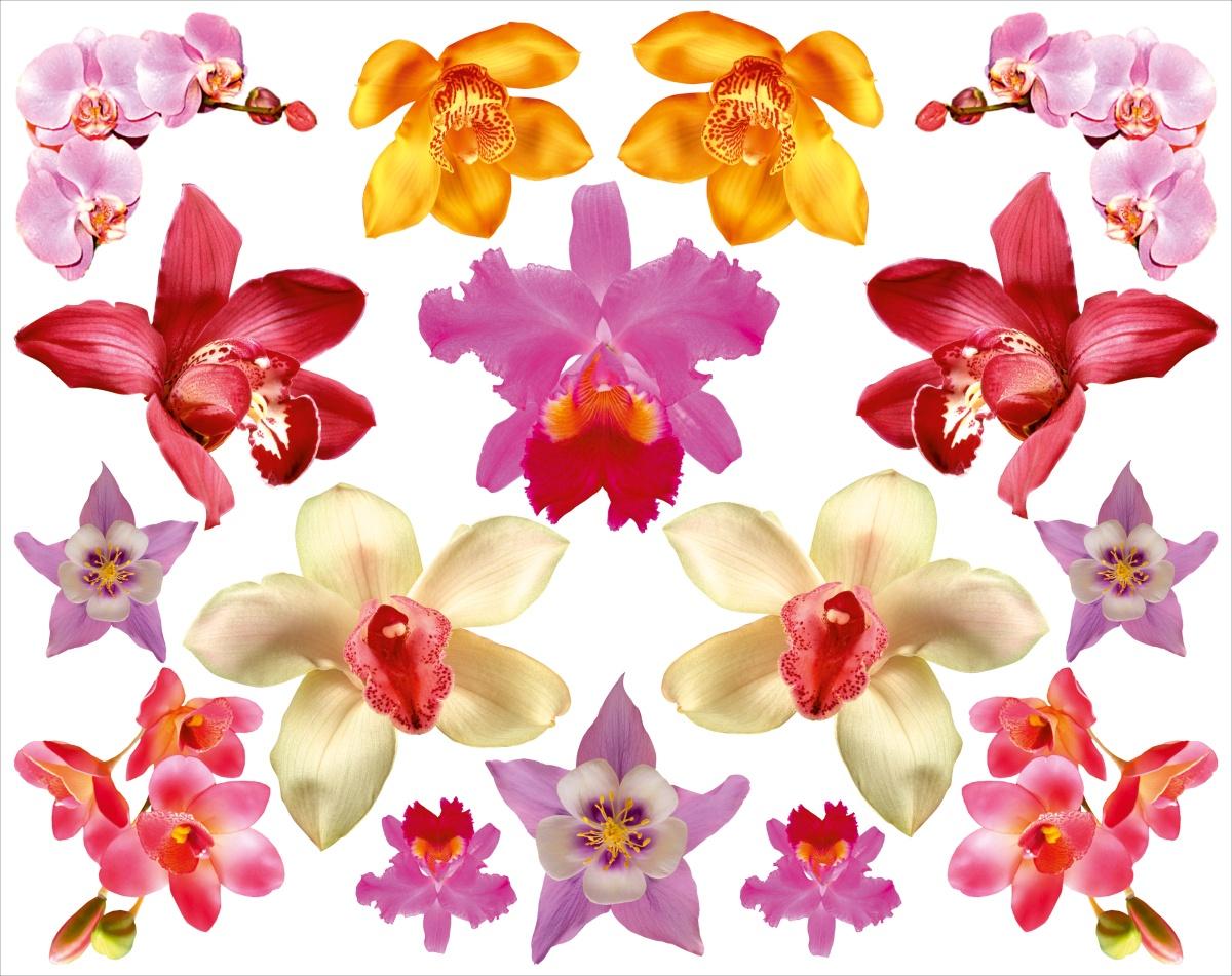 Наклейка ОранжевыйСлоник интерьерная Орхидеи с сильным клеевым слоем, Винил интерьерные наклейки homedeco наклейка интерьерная кошки 15х20 см