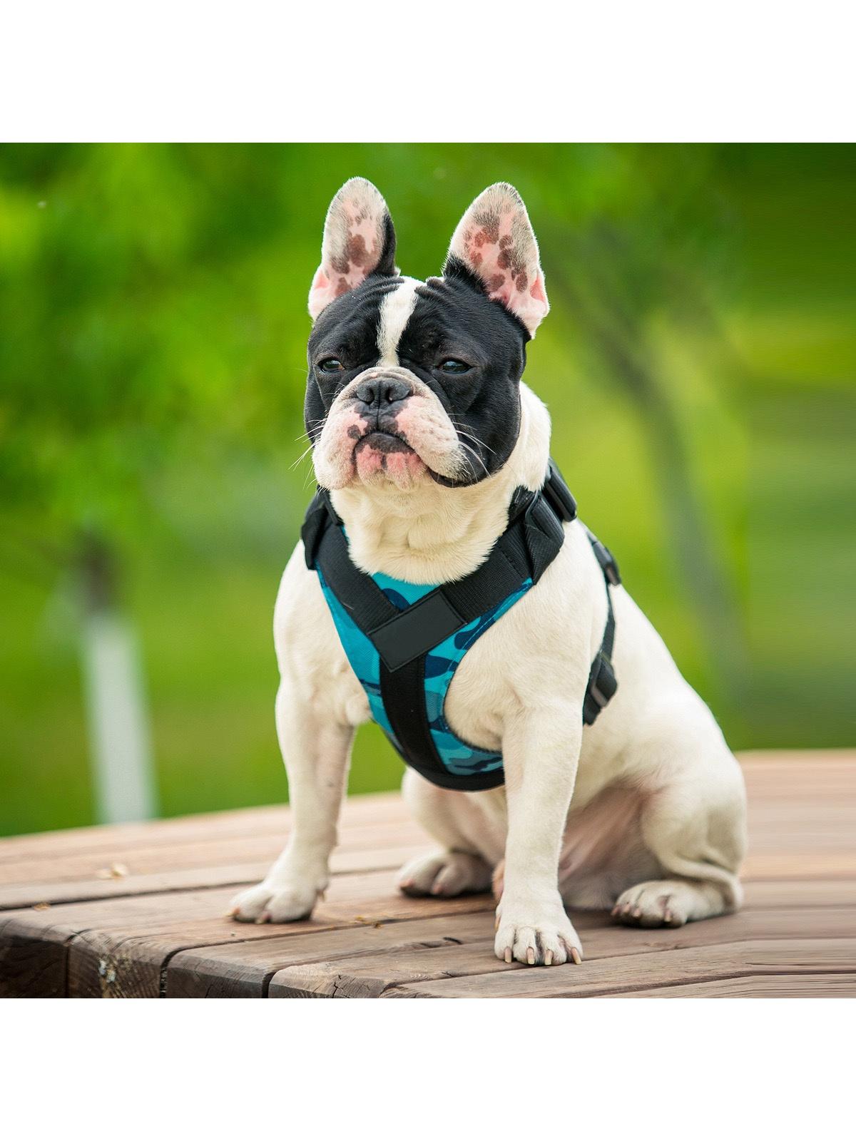 Шлейка Pets & Friends ошейник для собак голубой под грудь, размер L PF-DHF-04, голубой