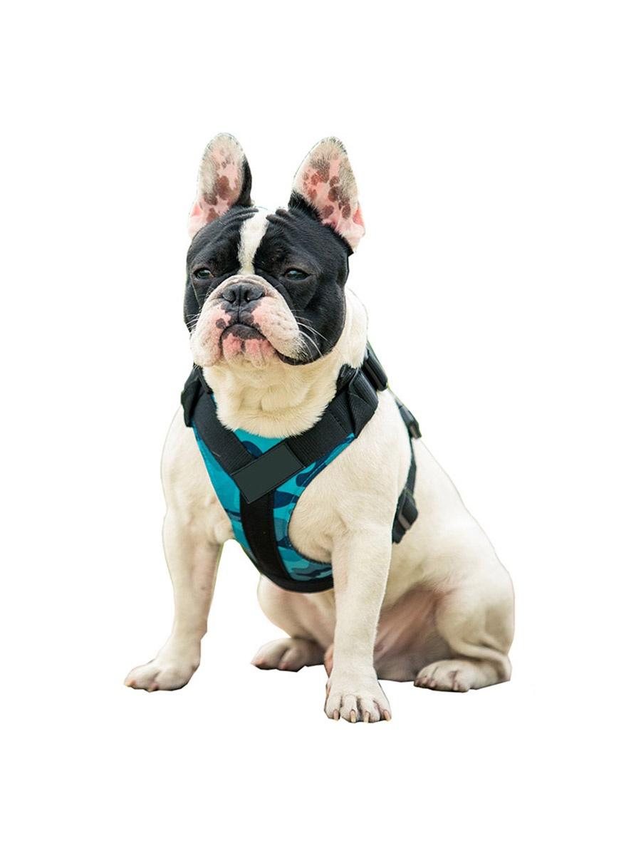 Шлейка Pets & Friends ошейник для собак голубой под грудь, размер M PF-DHF-03, голубой