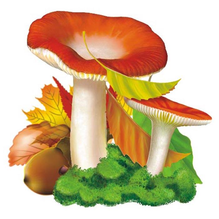 картинки гриб сыроежка на белом фоне раскрашивать любые