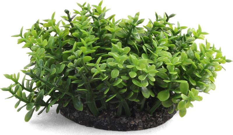 Растение для аквариума Laguna Микрантемум, 5 см аксессуары для аквариумов и террариумов laguna растение для аквариума с распылителем 30см
