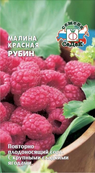 """Семена Седек """"Малина Красная Рубин"""", I0000000649, 0,05 г"""