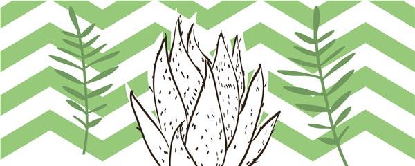 Картина Экорамка Cactus 2 50x20 см, Холст