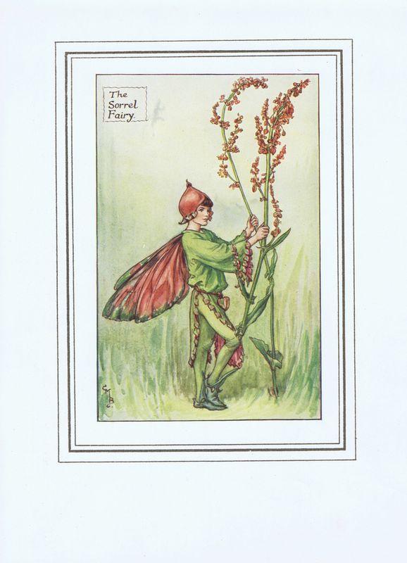 Гравюра Сесиль Мэри Баркер Эльф цветущего щавеля. Офсетная литография. Сесиль Мэри Баркер. Англия, Лондон и Глазго, 1927 год