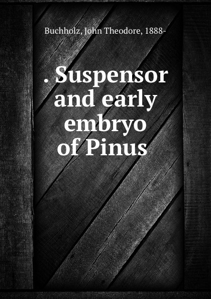 . Suspensor and early embryo of Pinus