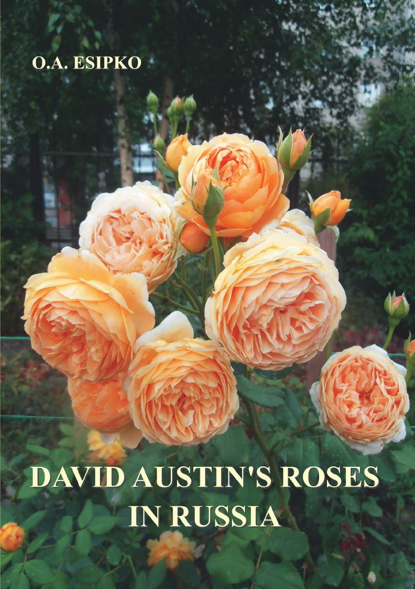 Есипко Олег Алексеевич David Austin.s Roses in Russia олег есипко world famous roses