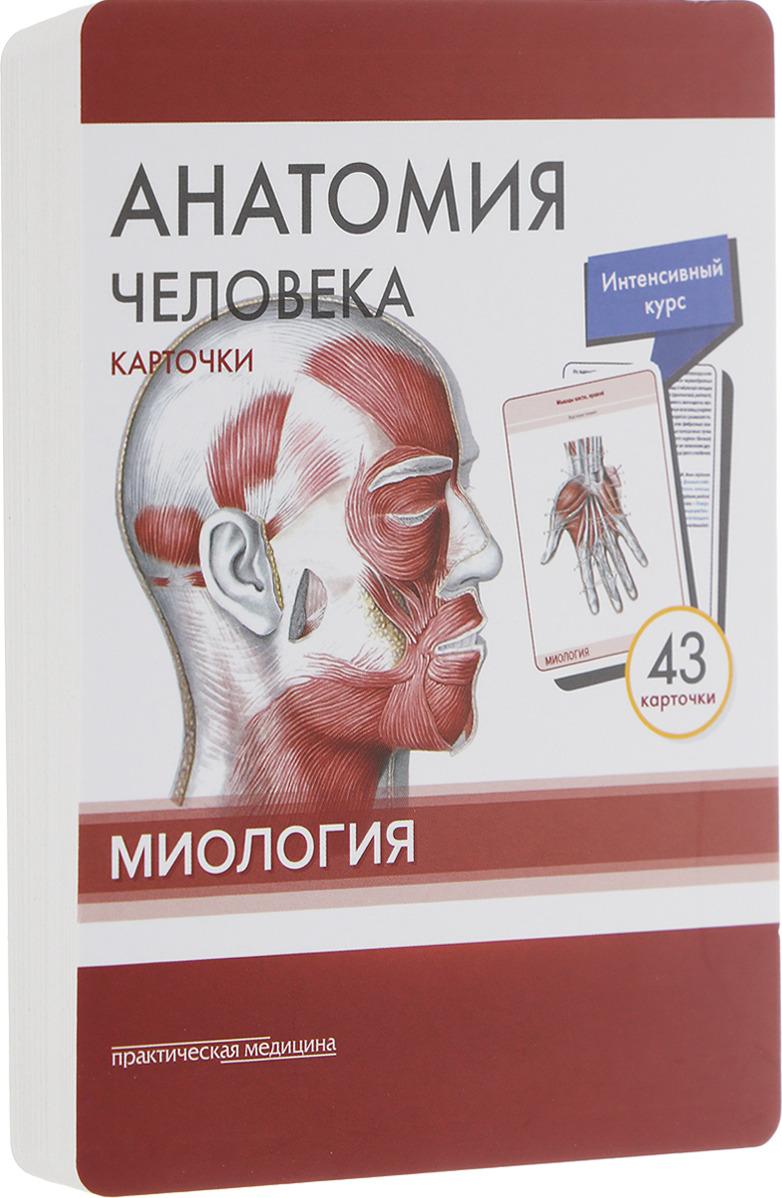 М. Р. Сапин, В. Н. Николенко, М. О. Тимофеева Анатомия человека. Миология (набор из 43 карточек)