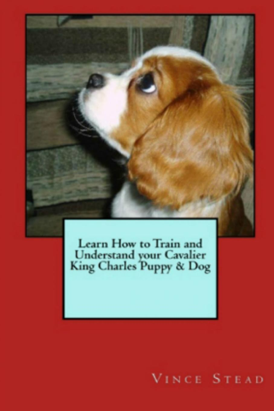 Vince Stead Learn How to Train and Understand Your Cavalier King Charles Puppy . Dog tatonka cavalier