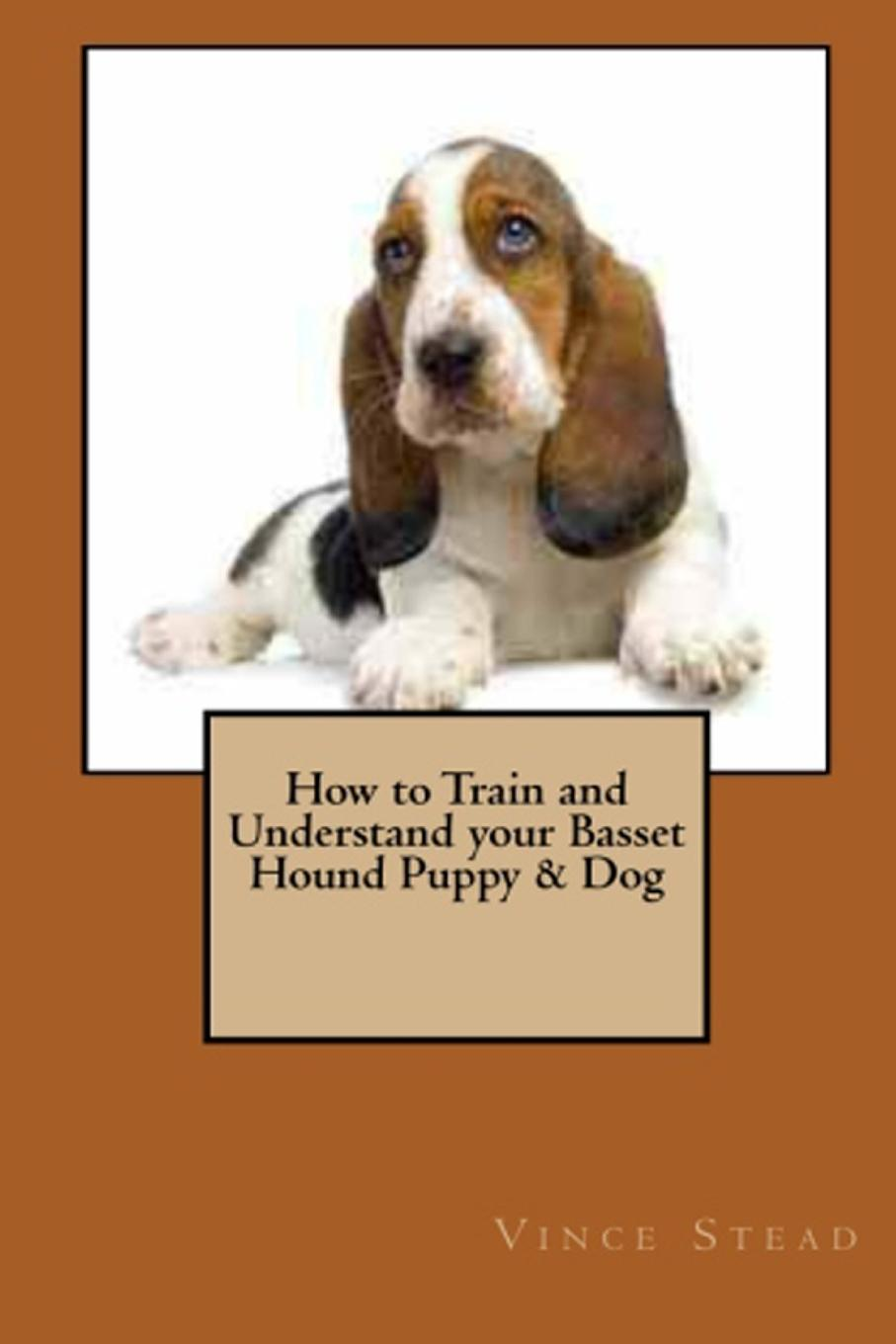 Vince Stead How to Train and Understand your Basset Hound Puppy . Dog vince stead how to train and understand your papillon puppy dog
