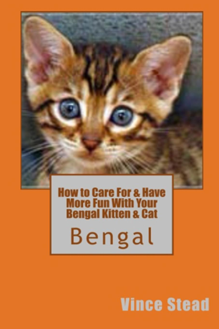 Vince Stead How to Care For . Have More Fun With Your Bengal Kitten . Cat how to catch a cat