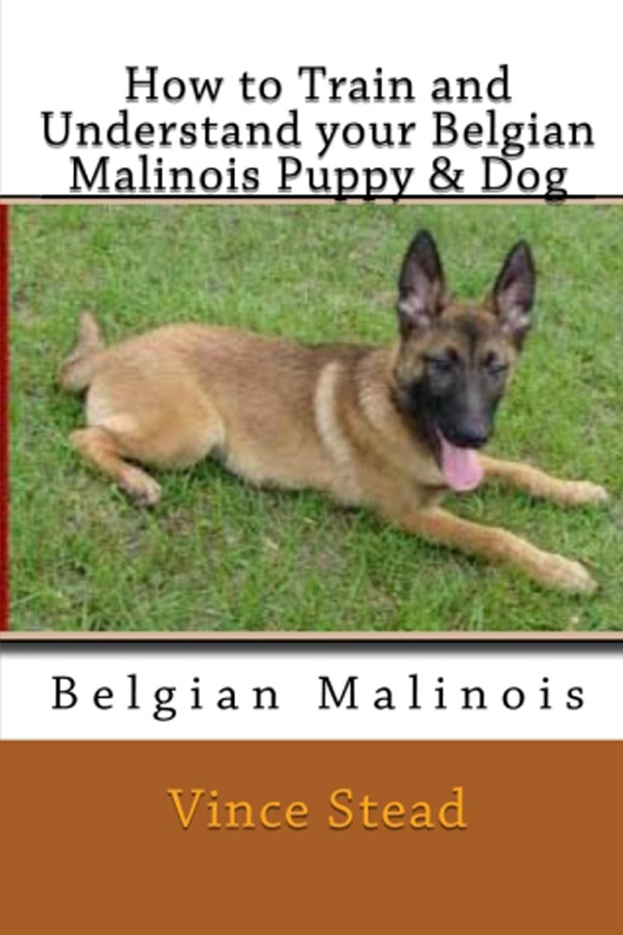 Vince Stead How to Train and Understand your Belgian Malinois Puppy . Dog vince stead how to train and understand your papillon puppy dog