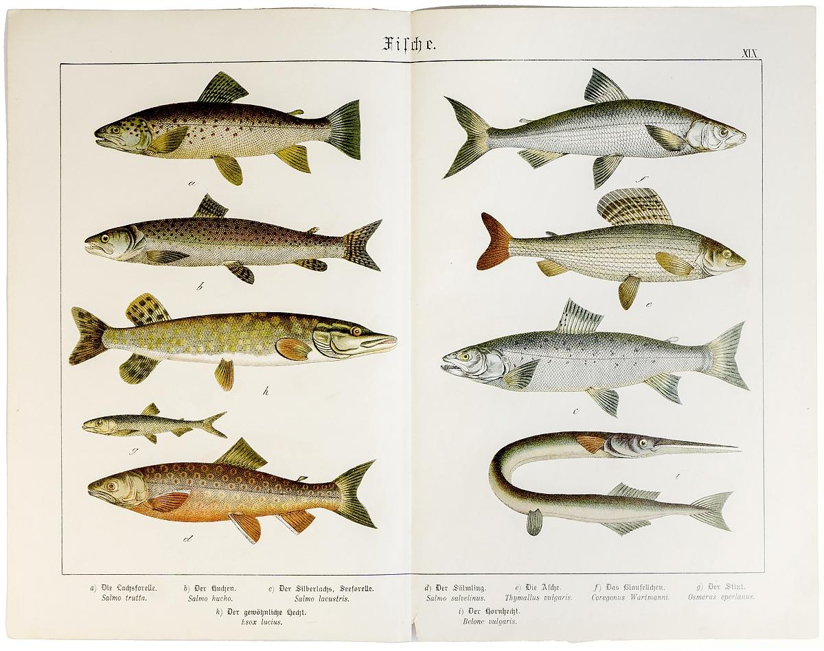 это северная рыба с названием и картинками алексеевского монастыря является