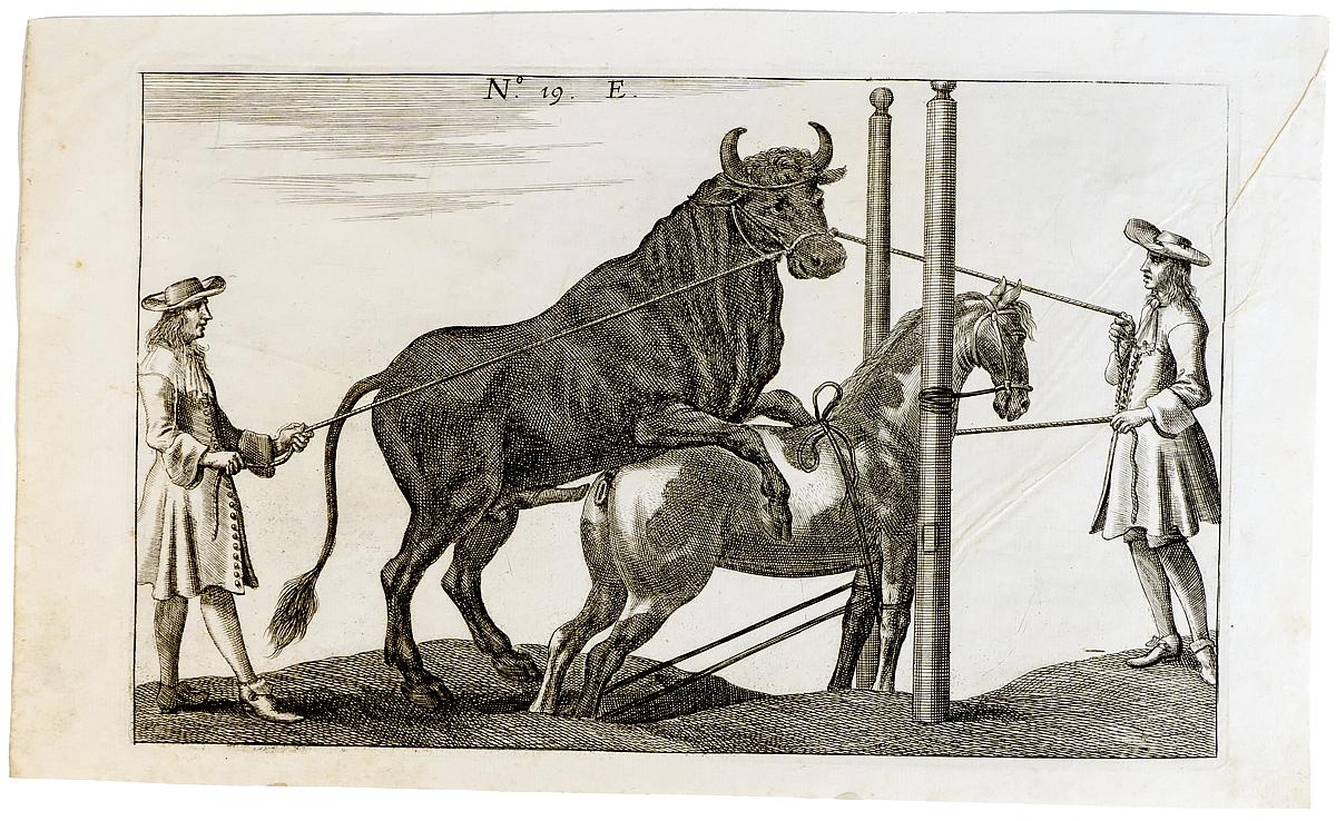 Гравюра Бык и кобыла. Западная Европа 17 век западная европа и культурная экспансия американизма