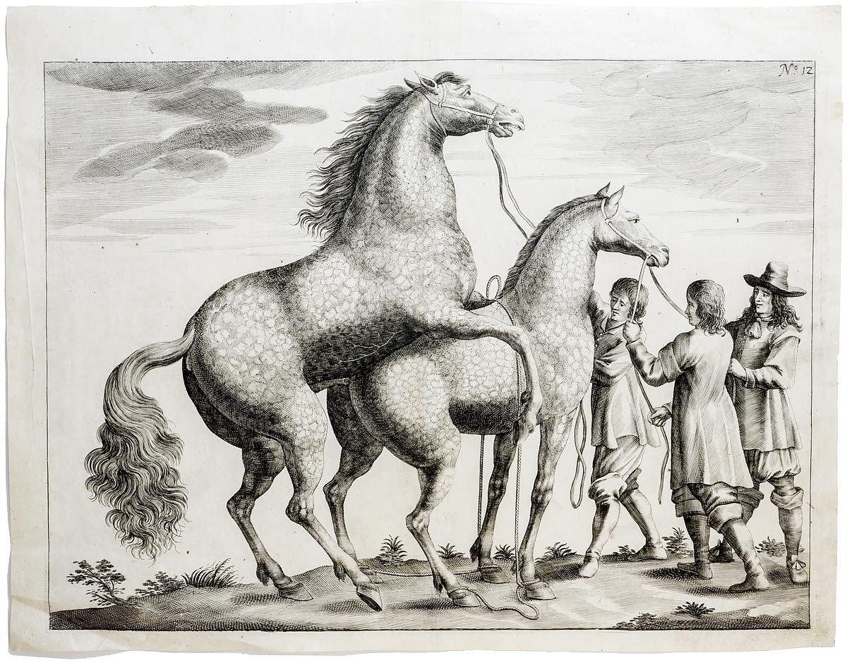 Гравюра Жеребец и кобыла. Западная Европа 17 век западная европа и культурная экспансия американизма