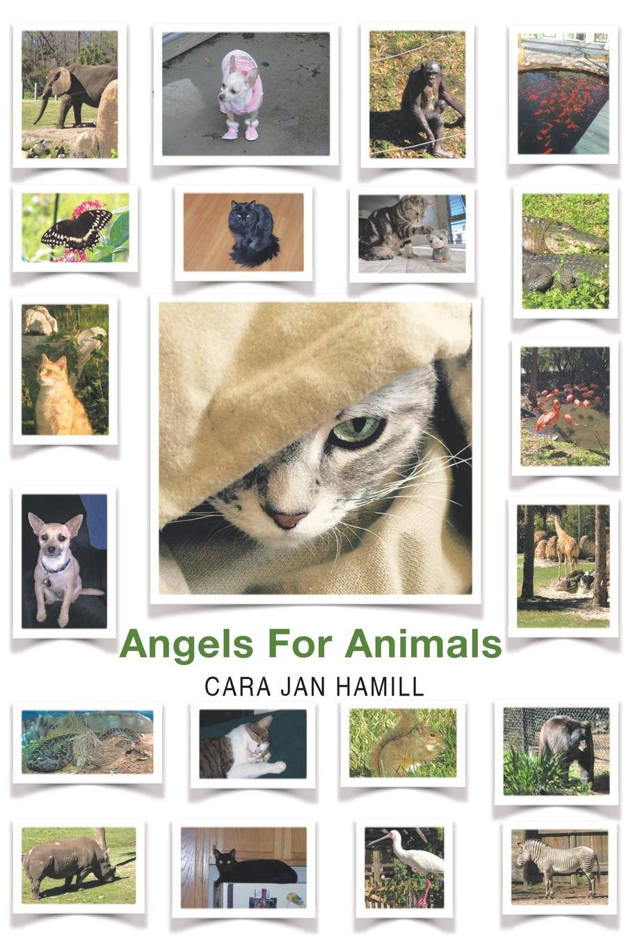 Cara Jan Hamill Angels for Animals alan webster hope for the future people who make a difference