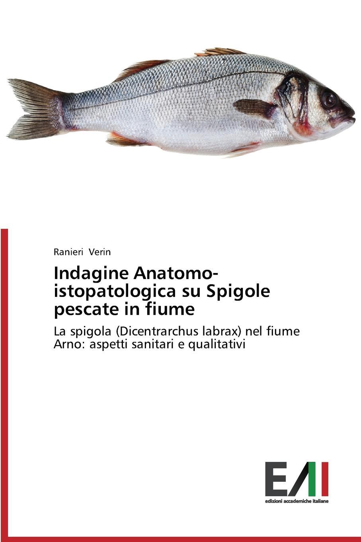 Verin Ranieri Indagine Anatomo-istopatologica su Spigole pescate in fiume enrico tasca il fiume di gennaio