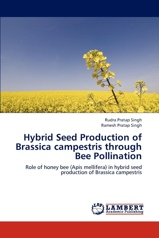 Singh Rudra Pratap, Singh Ramesh Pratap Hybrid Seed Production of Brassica campestris through Bee Pollination органические природный дикий пустырник пустырник сердечный пчелы honey bee pollen