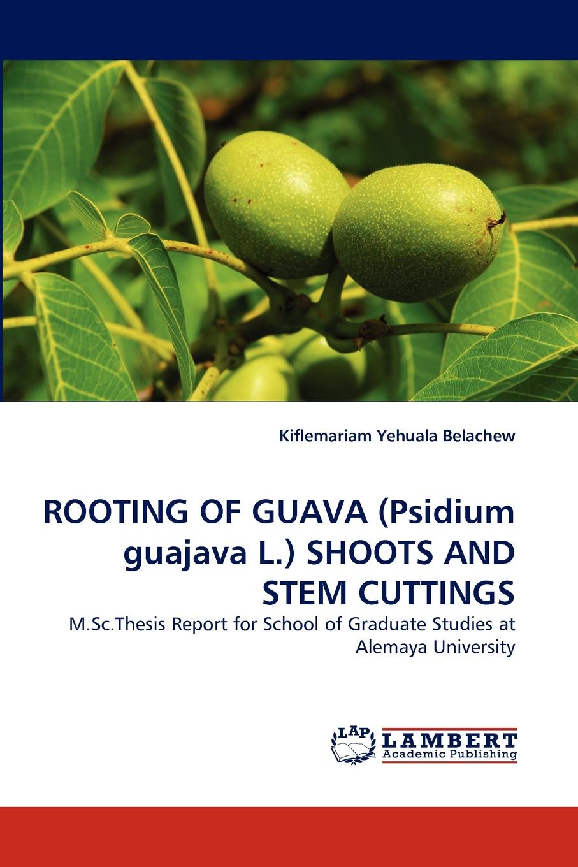 Kiflemariam Yehuala Belachew Rooting of Guava (Psidium Guajava L.) Shoots and Stem Cuttings недорго, оригинальная цена