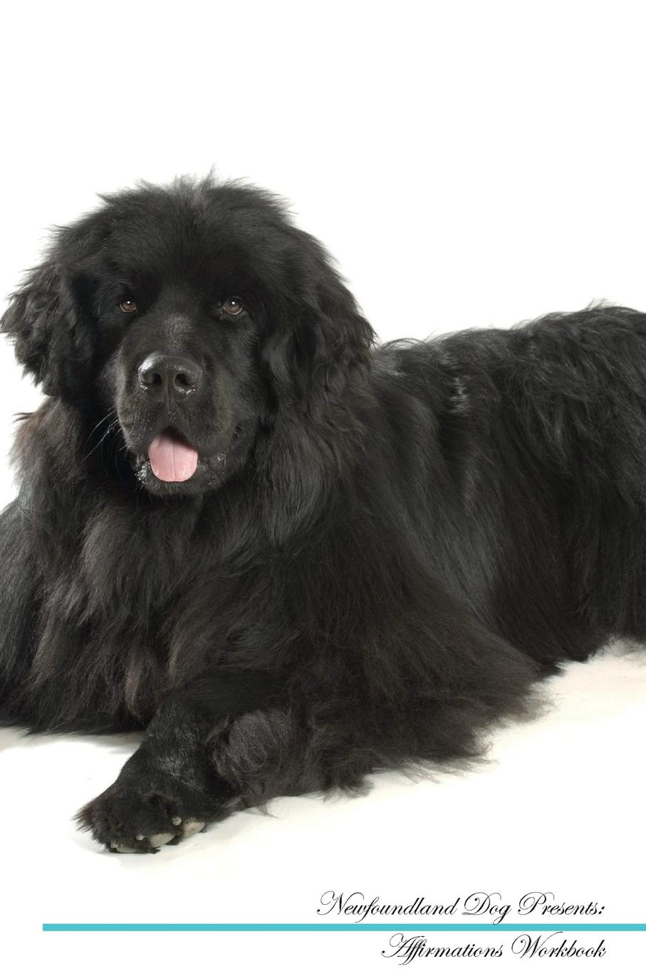 Live Positivity Newfoundland Dog Affirmations Workbook Newfoundland Dog Presents. Positive and Loving Affirmations Workbook. Includes: Mentoring Questions, Guidance, Supporting You. branch mary lydia a visit to newfoundland