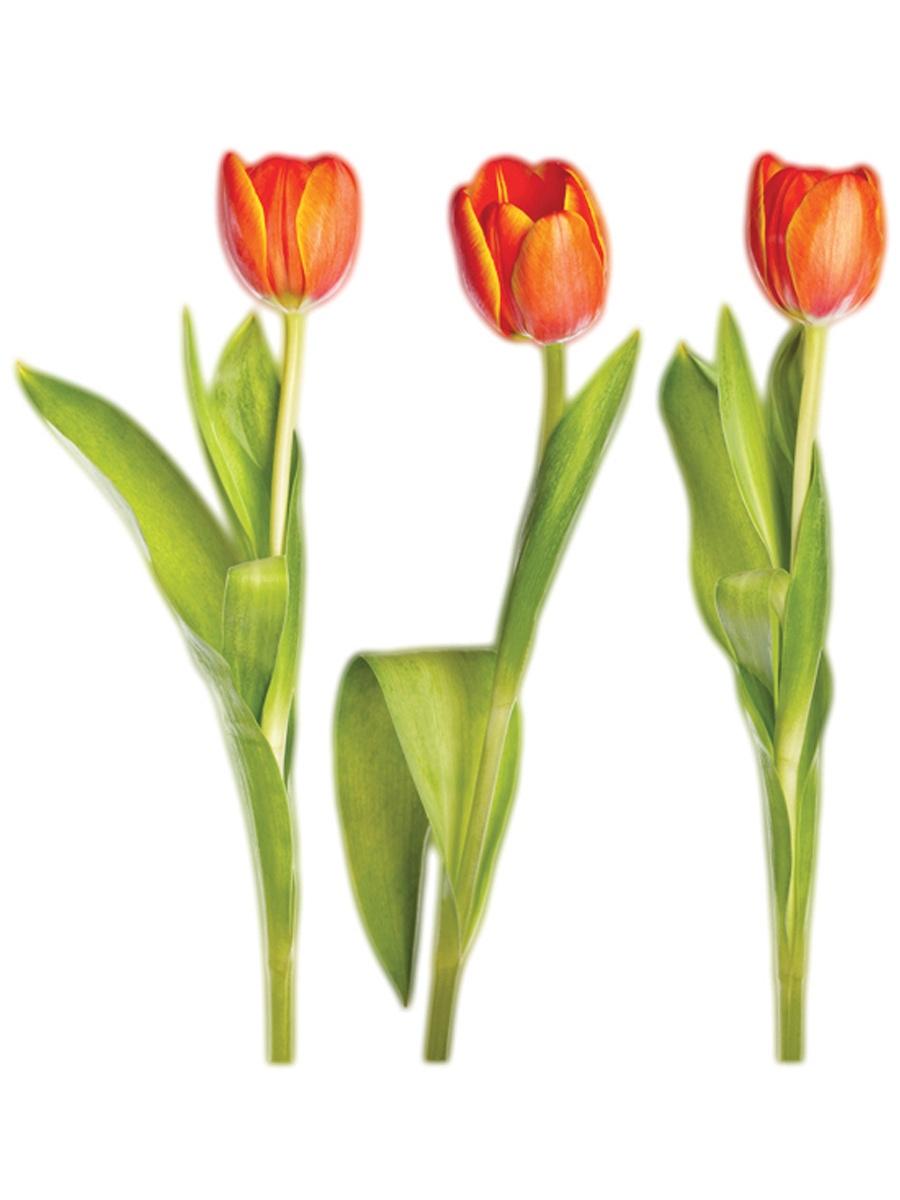 Картинка тюльпан для детей детского сада