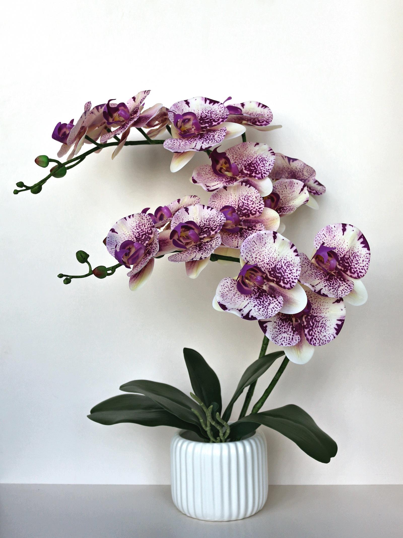 Купить в интернет магазине цветов орхидеи, цветы
