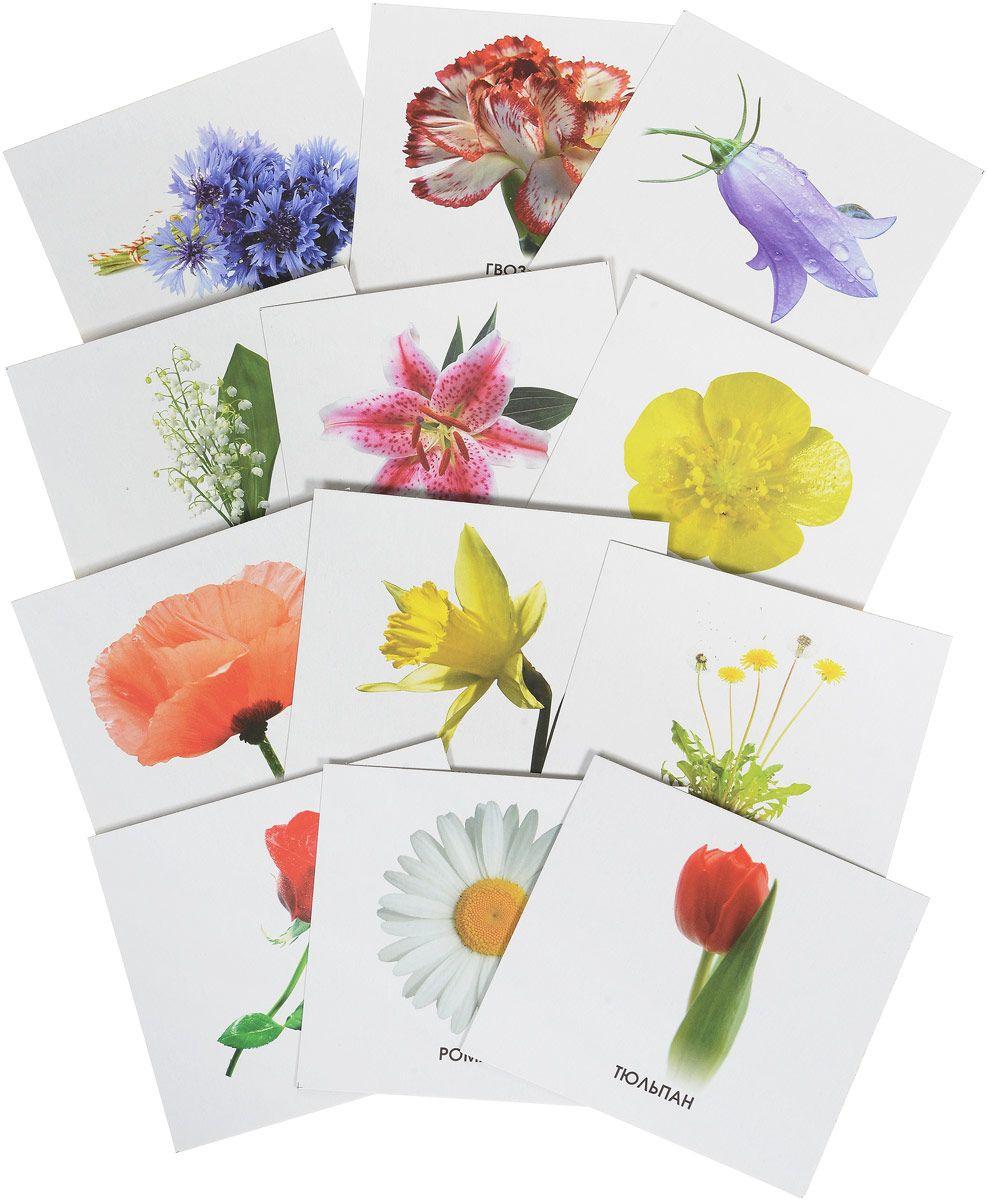 цена на Обучающая игра УЛЫБКА 17-1718 Учим карточки изучаем цветы.