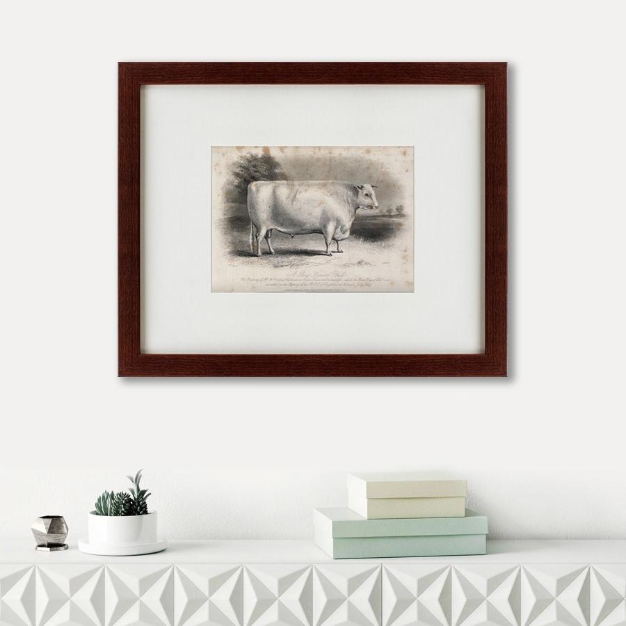 Картина Картины В Квартиру A short horned bull, 1849, Бумага