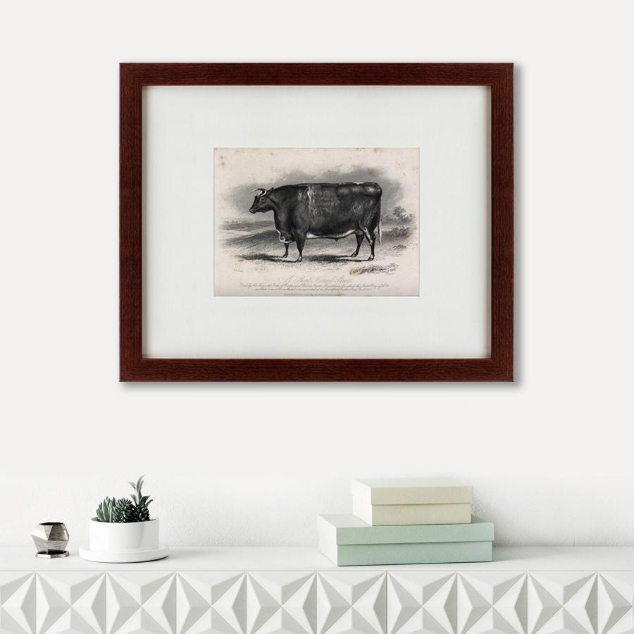 Картина Картины В Квартиру A short horned steer, 1849, Бумага