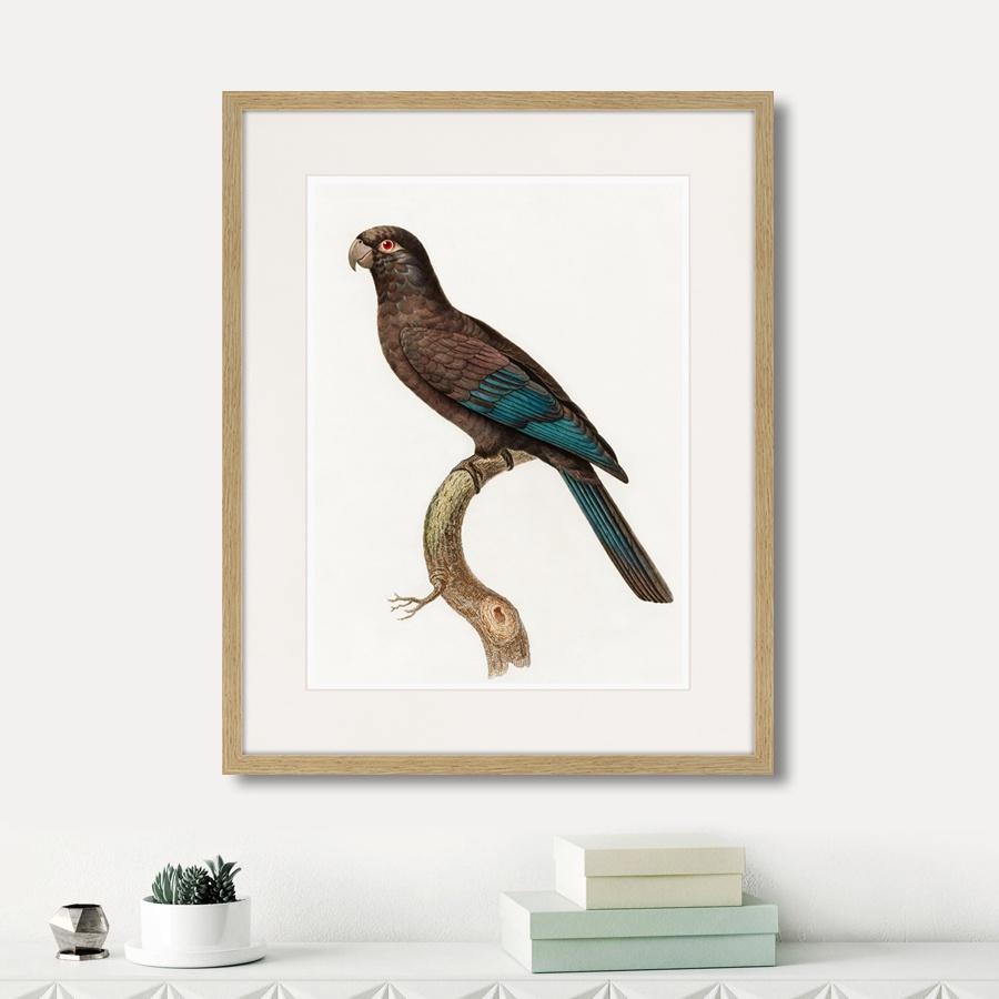 Картина Картины В Квартиру Beautiful parrots №10, 1872г., Бумага