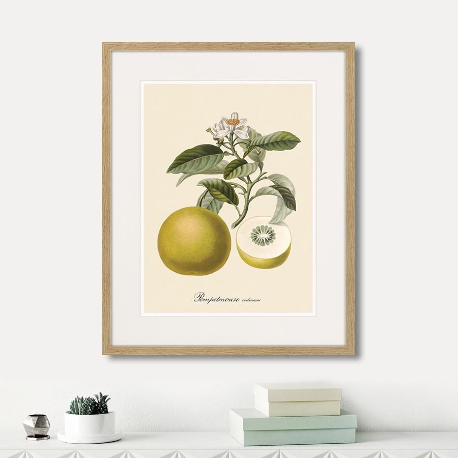 Картина Картины В Квартиру Juicy fruit lithography №10, 1870г., Бумага