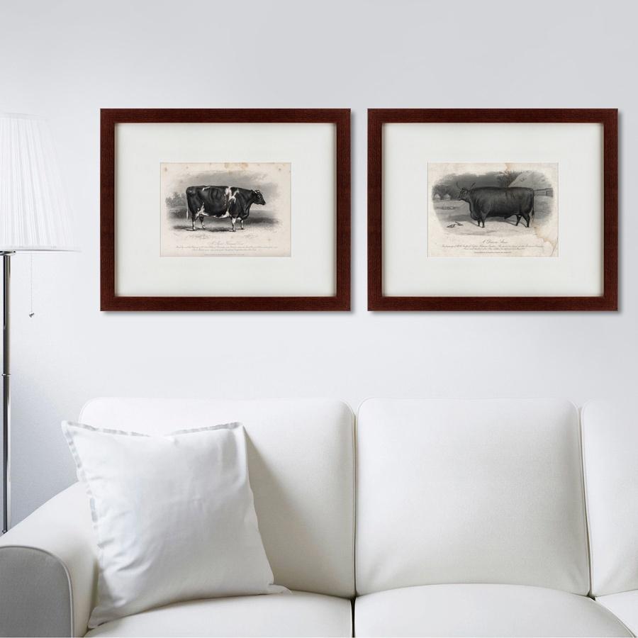 Картина Картины В Квартиру Коллекция A short horned cows (из 2-х картин), Бумага