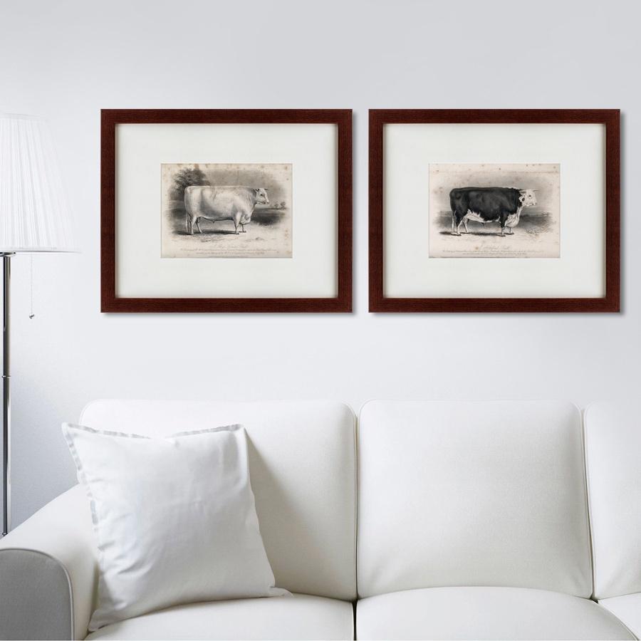 Картина Картины В Квартиру Коллекция A short horned bulls (из 2-х картин), Бумага
