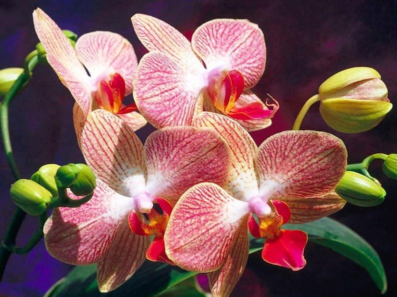 фото картинки орхидей пропускаю через мясорубку