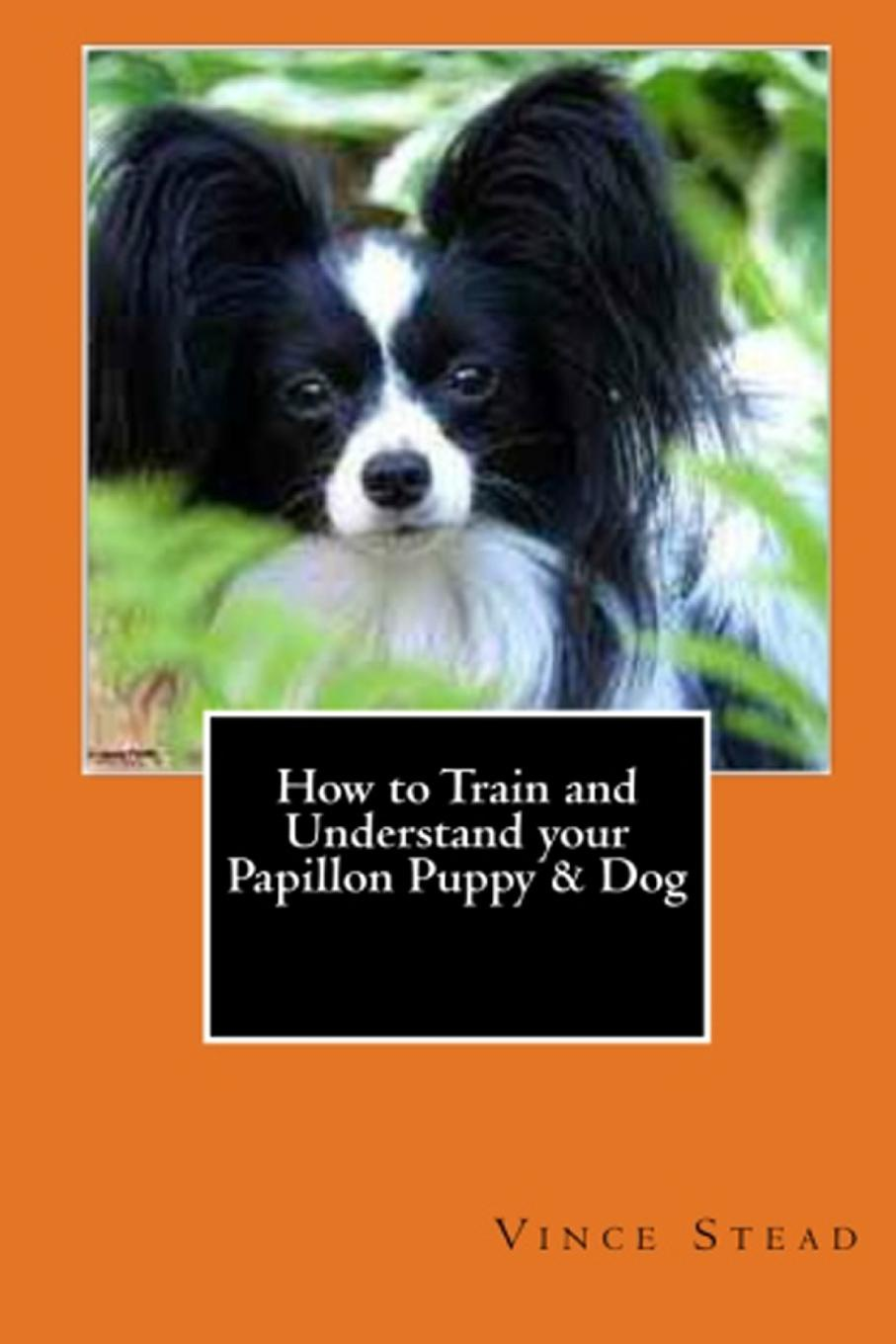 Vince Stead How to Train and Understand your Papillon Puppy . Dog vince stead how to understand and train your golden retriever puppy or dog