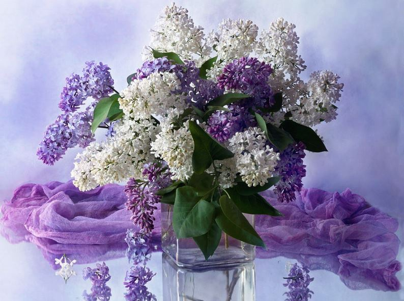Поздравления цвети и пахни