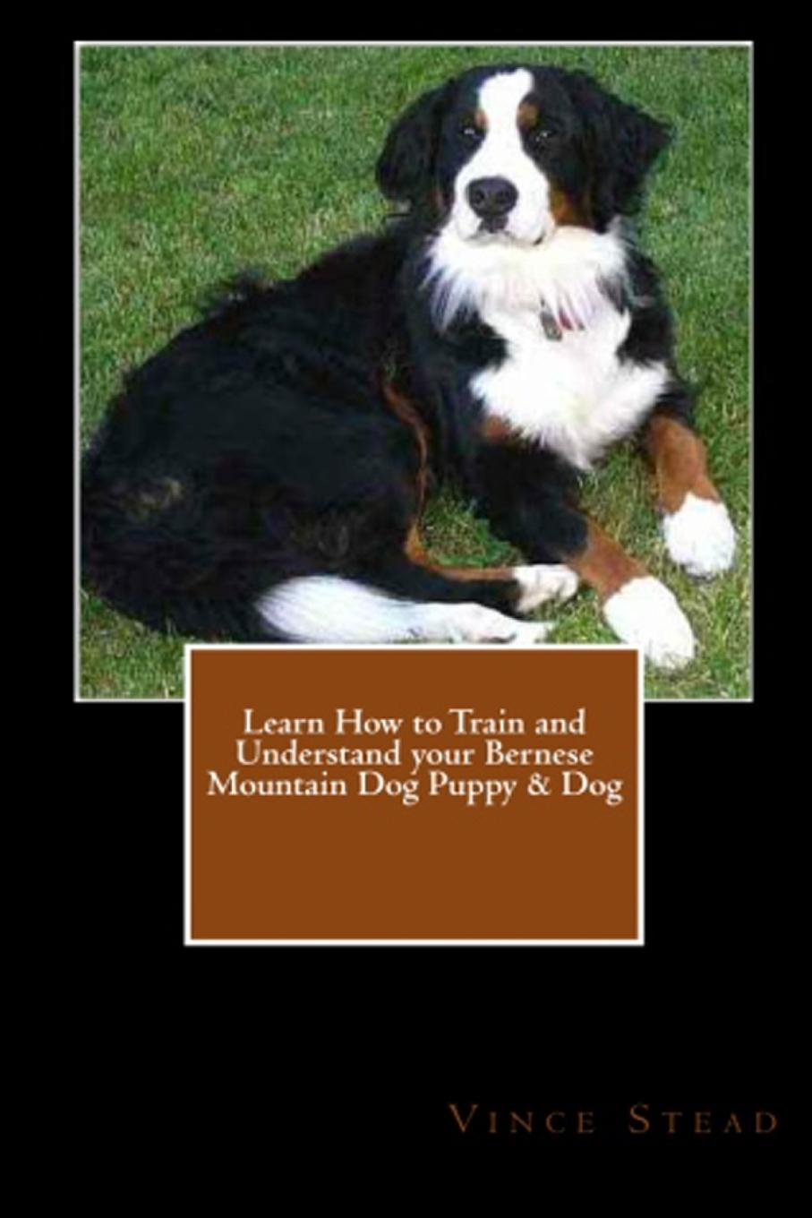 Vince Stead Learn How to Train and Understand your Bernese Mountain Dog Puppy . Dog vince stead how to understand and train your golden retriever puppy or dog