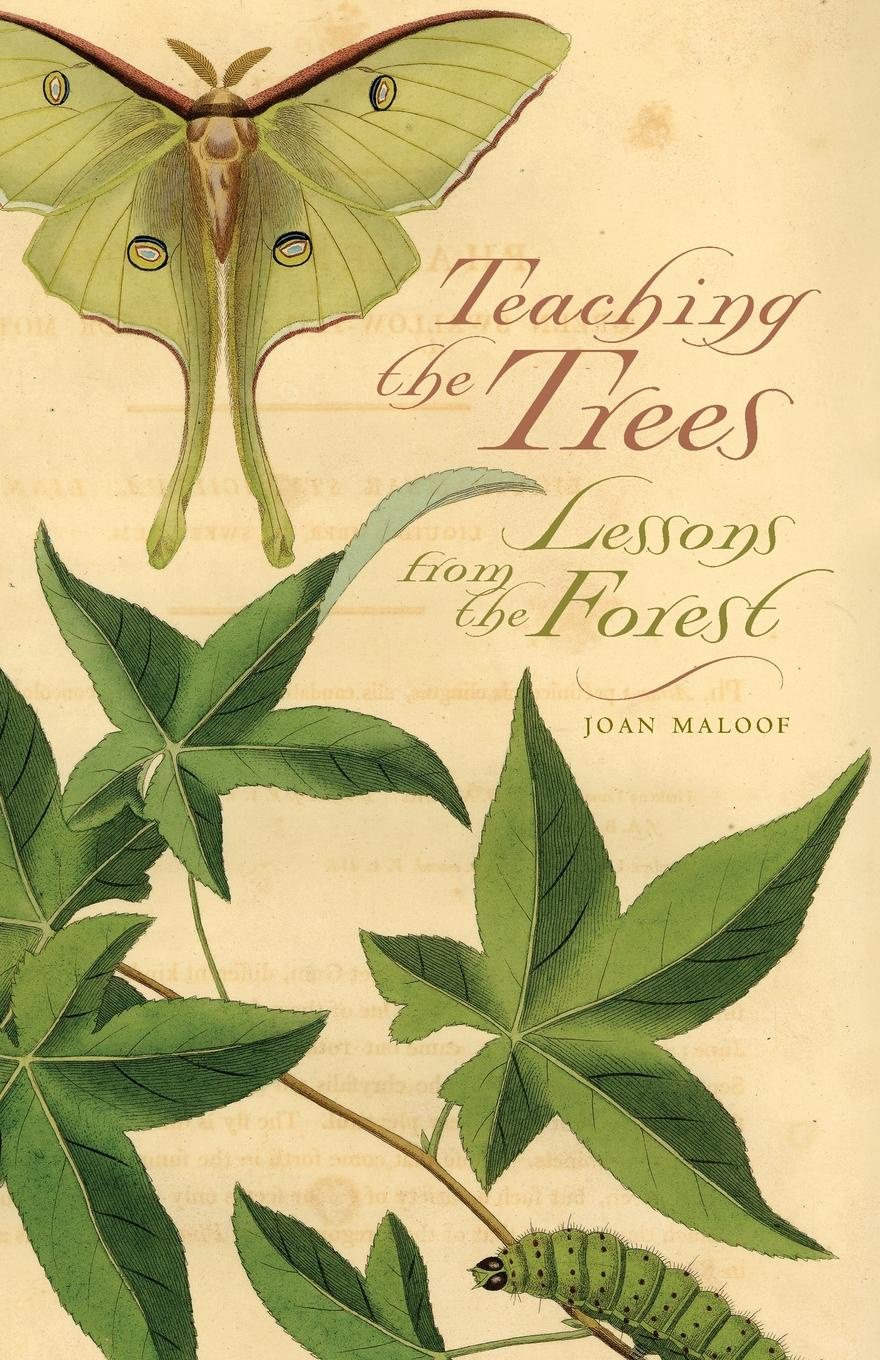 Joan Maloof Teaching the Trees. Lessons from the Forest james lang m small teaching everyday lessons from the science of learning