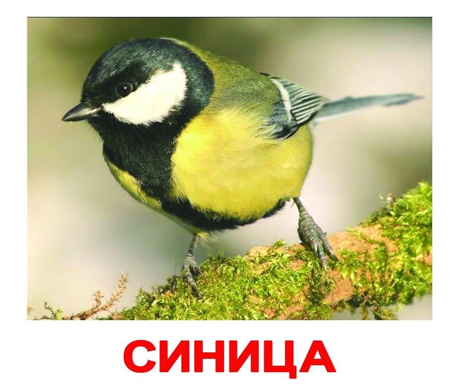цена Обучающая игра Вундеркинд с пеленок Карточки Домана Птицы онлайн в 2017 году