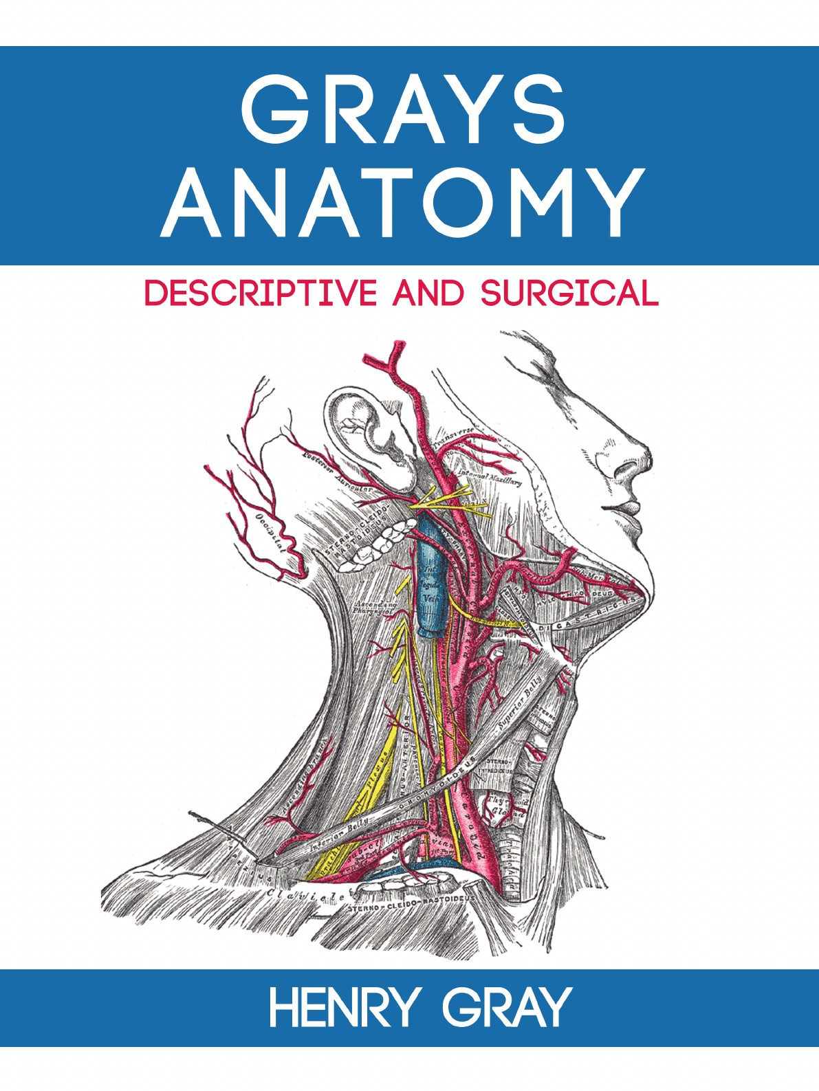 Henry Vandyke Carter, Henry Gray Gray's Anatomy: Descriptive and Surgical anatomy a cutaway look inside the human body