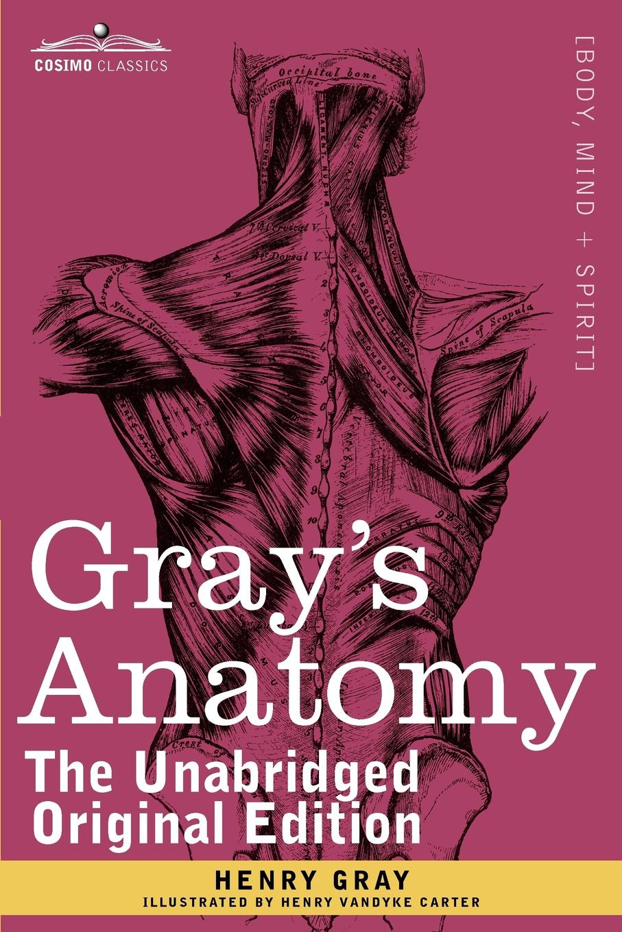 Henry Gray, Henry Vandyke Carter Gray's Anatomy. Descriptive and Surgical anatomy a cutaway look inside the human body
