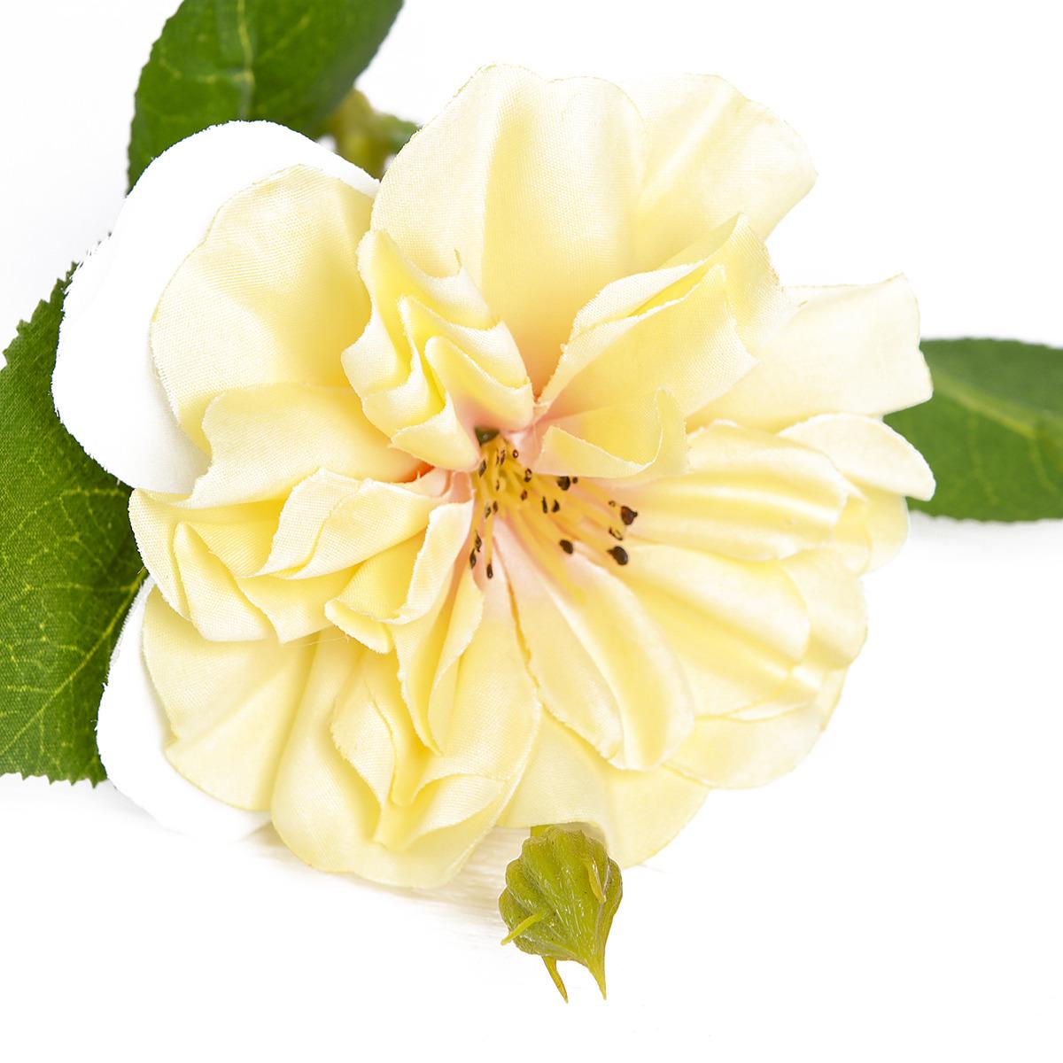 Где купить цветы шиповника в москве
