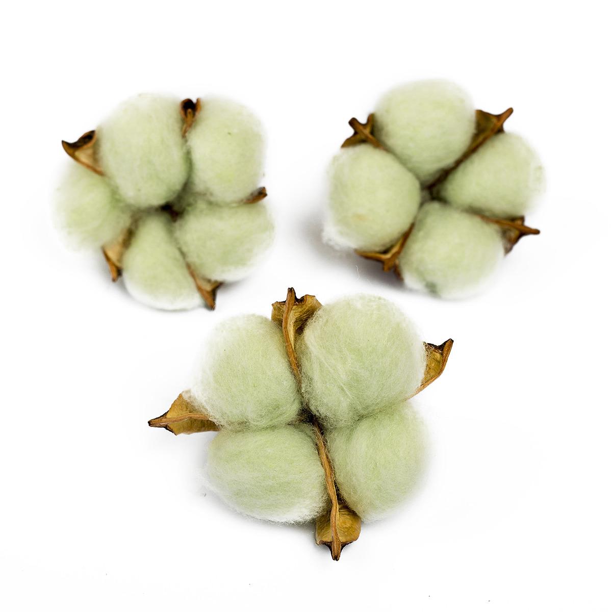 сухие бассейны Сухие цветы хлопка, 4104738, зеленый, 3 шт