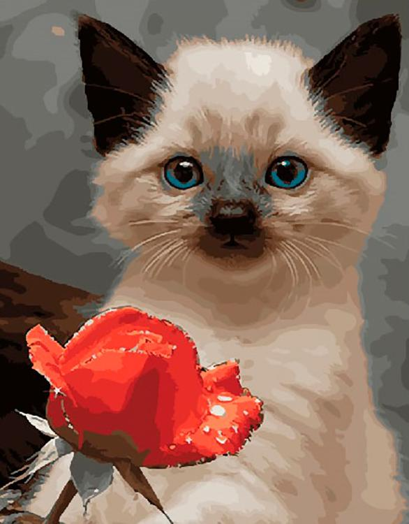 Открытка орхидеи, красивые открытки котики и розы
