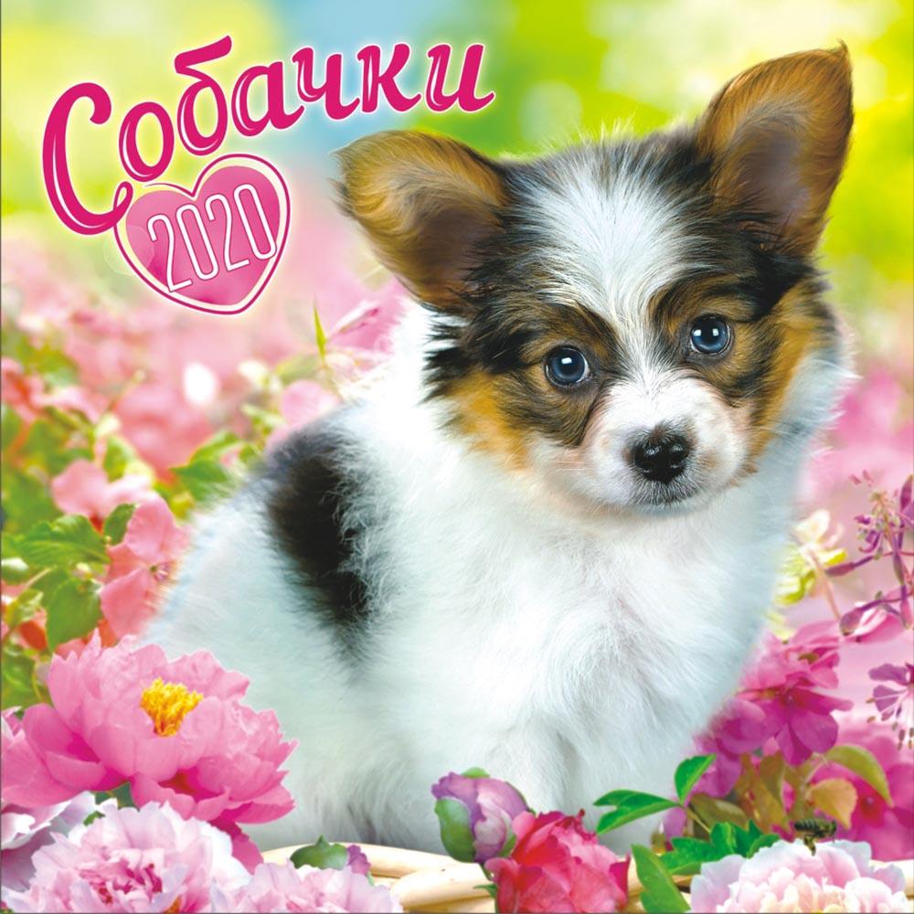 Календарь перекидной на 2020 год малый на скрепке Собаки, 155х160мм МПК-20-024 календарь перекидной малый на скрепке на 2020 год иконы 155х160мм мпк 20 007