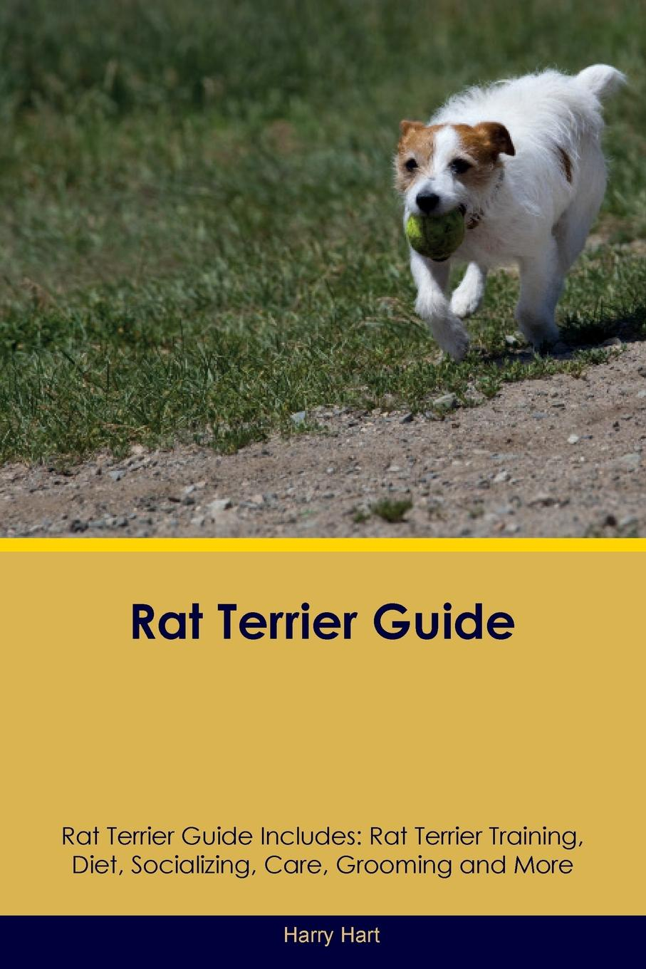 Rat Terrier Guide Rat Terrier Guide Includes. Rat Terrier Training, Diet, Socializing, Care, Grooming, Breeding and More