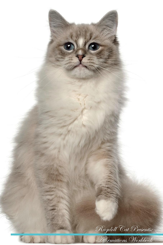 Фото - Live Positivity Ragdoll Cat Affirmations Workbook Ragdoll Cat Presents. Positive and Loving Affirmations Workbook. Includes: Mentoring Questions, Guidance, Supporting You. ragdoll